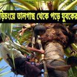 কুমিল্লার বুড়িচংয়ে তালগাছ থেকে পড়ে দিনমজুরের মৃত্যু