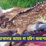 কুমিল্লা চিড়িয়াখানার আহত মা হরিণ অবশেষে মারা গেছে