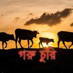 কুমিল্লায় দারোয়ানের হাত-পা বেঁধে খামারের গরু লুট