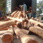 কুমিল্লায় কাভার্ডভ্যান বোঝাই দশ লাখ টাকার সেগুন কাঠ আটক
