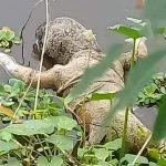 চাঁদপুরের হাজীগঞ্জে খাল থেকে অজ্ঞাত শিশুর লাশ উদ্ধার