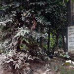 কুমিল্লার কৃষ্ণপুর-ধনঞ্জয় বধ্যভূমি: ৩৭ জনকে হত্যা করে পাক বাহিনী