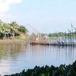 চৌদ্দগ্রামে ডাকাতিয়া-কাঁকড়ী নদীতে অতিরিক্ত ভেসালে ক্ষতিগ্রস্ত মাছের প্রজনন